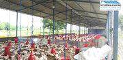 POULTRY FARM CONSTRUCTION